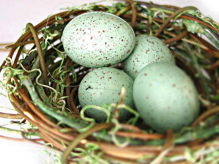401k, nest egg, 401 basics, what i need to know, what questions should i ask about,